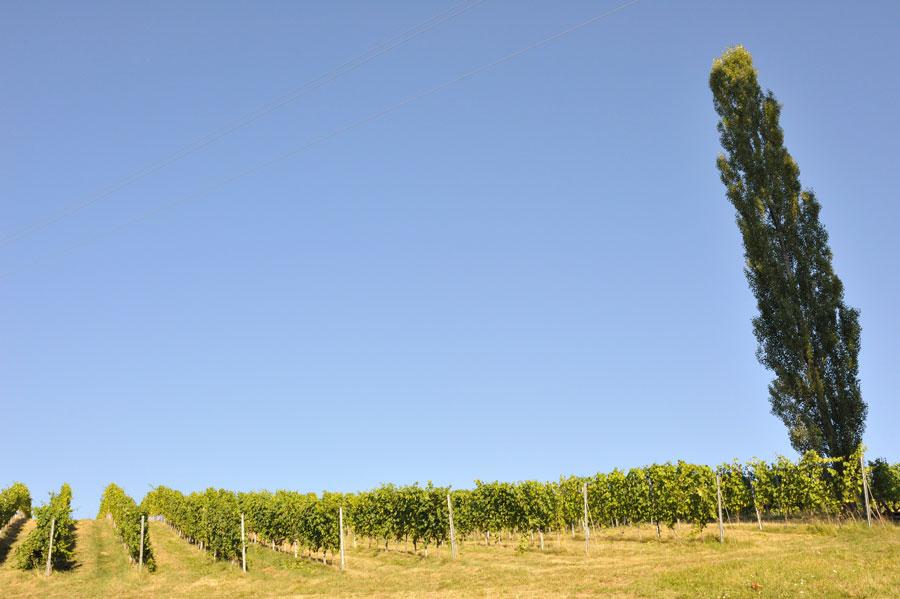 Vins Autriche Styrie Steiermark Blog
