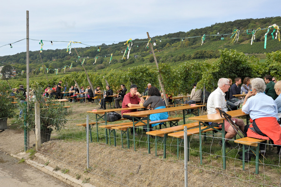 Heuriger, Buschenschank, Vienne, Kahlenberg, Vin, Vignobles, Wiener Weinwandertag